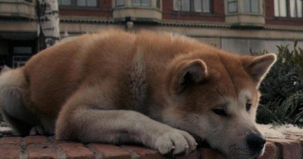 Νέο «Χάτσικο» στο Κουκάκι: Περιμένει να επιστρέψει το αφεντικό του που πέθανε
