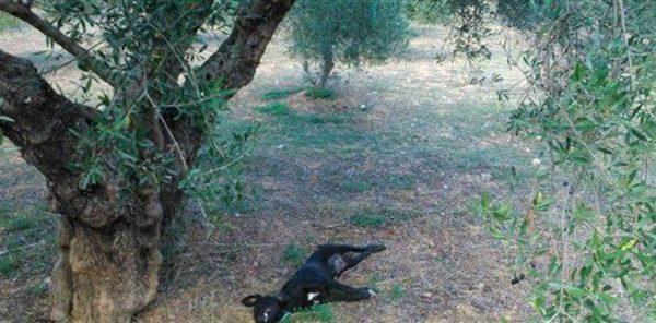 Κτηνωδία: κρέμασαν σκύλο σε δέντρο (φωτο)