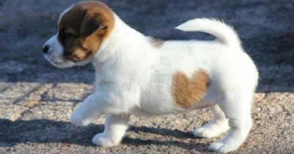 33 μοναδικά σκυλιά με πολύ ασυνήθιστα τριχώματα!