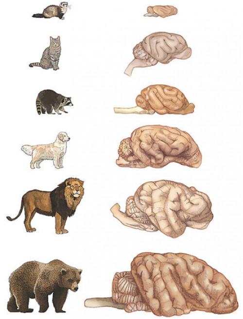 Σκύλος εξυπνάδα Γάτα