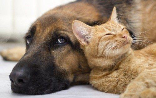 Σκύλοι και γάτες. Τελικά ποιος είναι ο εξυπνότερος; Έρευνα απαντά για πρώτη φορά στο «αιώνιο» ερώτημα
