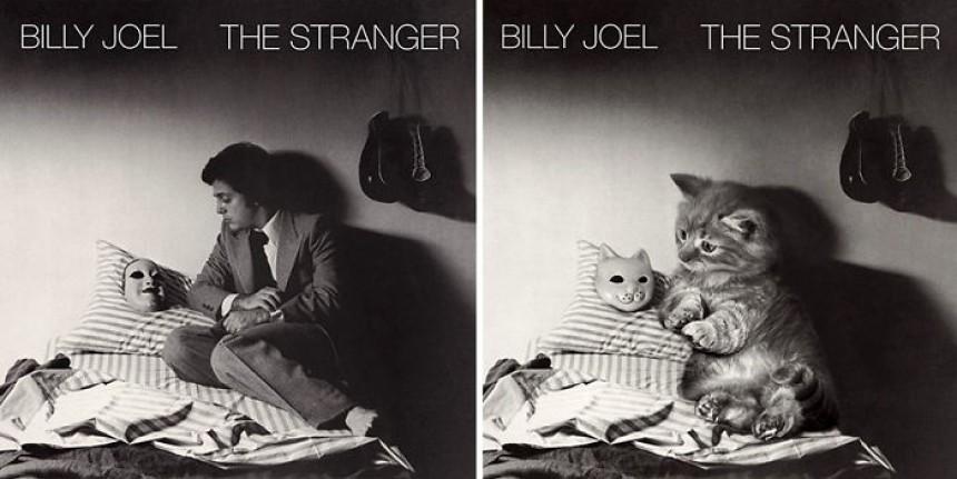 γάτες φωτογραφίες γάτες γατάκια