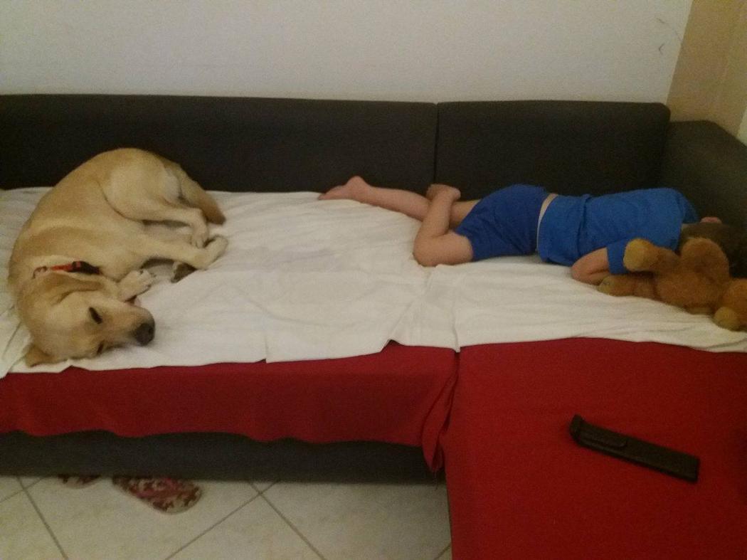 σκύλος πολλαπλών βοηθειών σκύλος βοηθειών