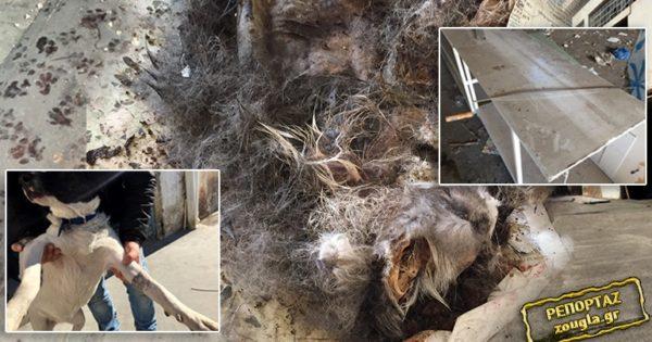 ΣΟΚ: Κολαστήριο ζώων στο Περιστέρι – Aλλοδαποί προετοίμαζαν σκύλους για να καταναλωθεί το κρέας τους!