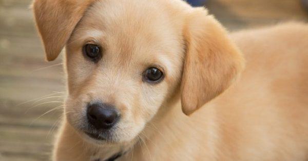 Μαζική θανάτωση σκύλων με φόλες στον Βόλο – 23 νεκρά κουτάβια