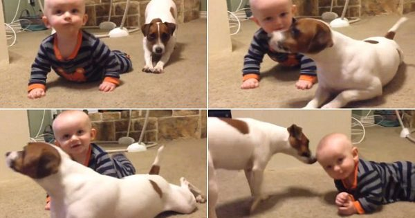 Σκυλάκι μαθαίνει σε μωρό πώς να μπουσουλήσει
