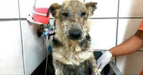 Εγκατέλειψαν αυτό το κακοποιημένο κουτάβι και το άφησαν να πεθάνει επειδή ήταν βρώμικο. Η ζωή όμως του έδωσε μια δεύτερη ευκαιρία