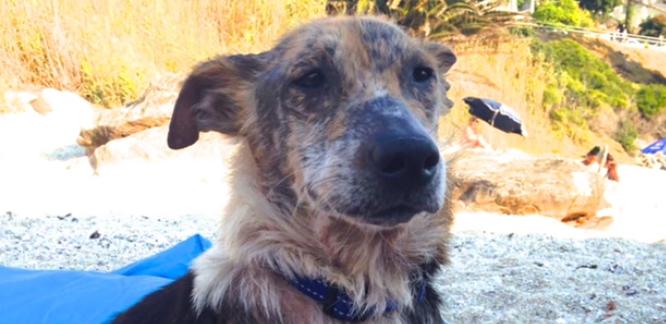 υιοθεσία αδέσποτων κακοποίηση σκύλων Αδέσποτα