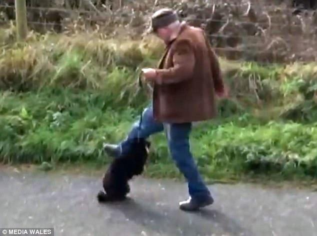 κακοποίηση σκύλου κακοποίηση ζώου άντρας κακοποιεί ζώο