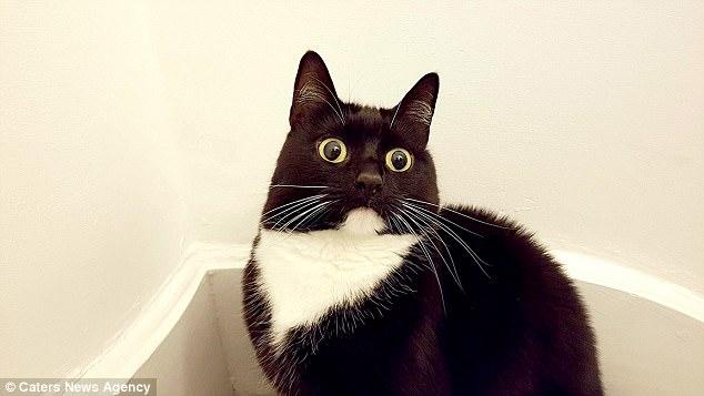 Γάτα twitter