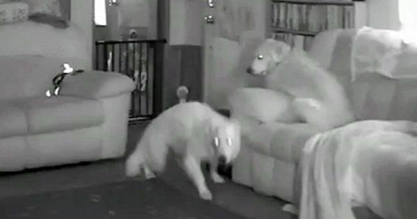 Έλεγε ότι τα σκυλιά της έχουν περίεργη συμπεριφορά, αλλά κανείς δεν την πίστευε. Τότε τους έδειξε ΑΥΤΟ το Βίντεο!