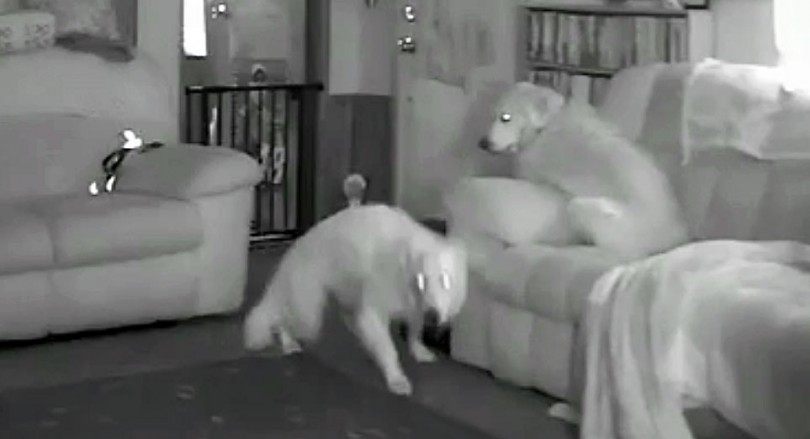 συμπεριφορά Σκύλος