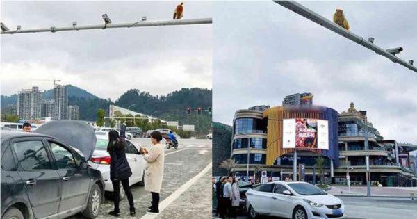 Γυναίκα μπέρδεψε οπίσθια μαϊμούς με κόκκινο φανάρι και προκάλεσε ατύχημα
