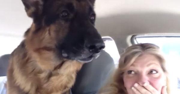 Σκύλος ανακαλύπτει ότι μόλις έφτασε στον κτηνίατρο