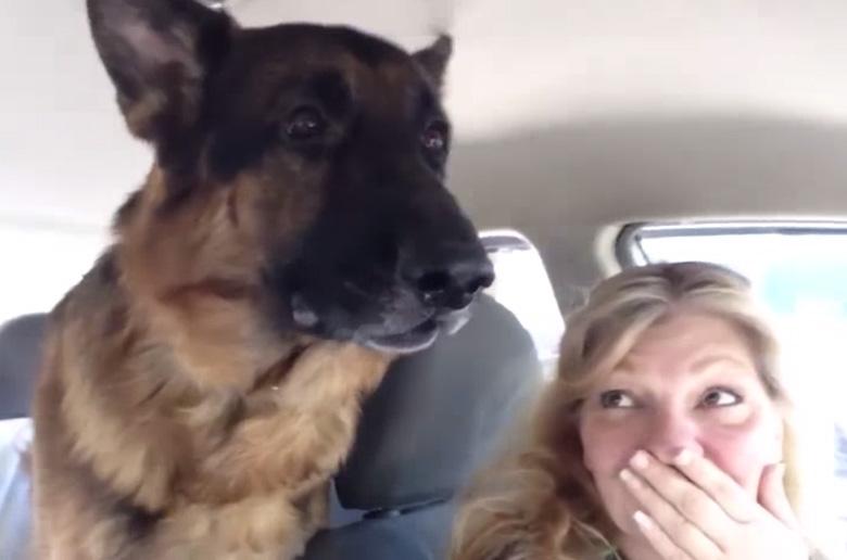 Σκύλος κτηνίατρος Βίντεο