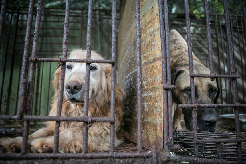 διάσωση σκύλων απελευθέρωση σκύλων