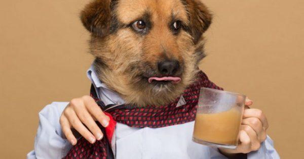 Rooffee: Ο καφές για σκύλους (βίντεο)