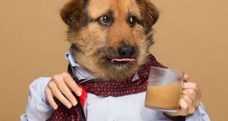 Rooffee-Καφές-για-σκύλους-750x400