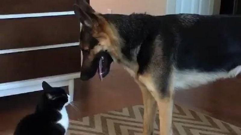 Μια γάτα και ένας σκύλος καβγαδίζουν, όταν ξαφνικά…