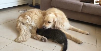 Βίντεο: Ο σκύλος που απολογείται στη γάτα