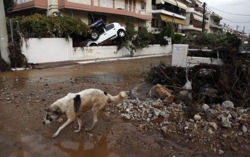 Τα αδέσποτα σκυλάκια που σώθηκαν στη Δυτική Αττική αναζητούν ένα σπίτι!