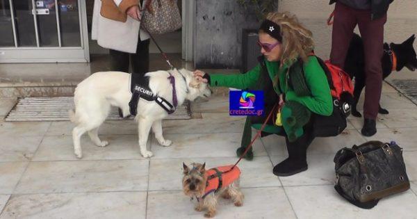 Διαμαρτυρία για τα αδέσποτα ζώα στο Ρέθυμνο – «Αν δεν βοηθούσαν οι φιλόζωοι θα ήταν σε αγέλες τα αδέσποτα ζώα στους δρόμους!»