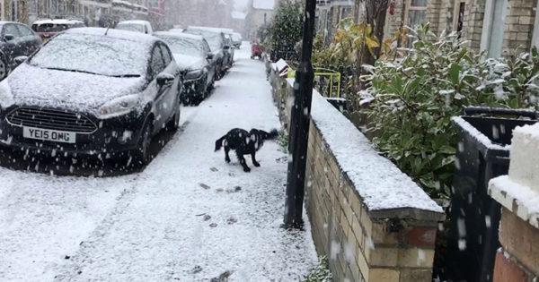 Η απίθανη αντίδραση ενός σκύλου που βγαίνει στο χιόνι για πρώτη φορά (Video)