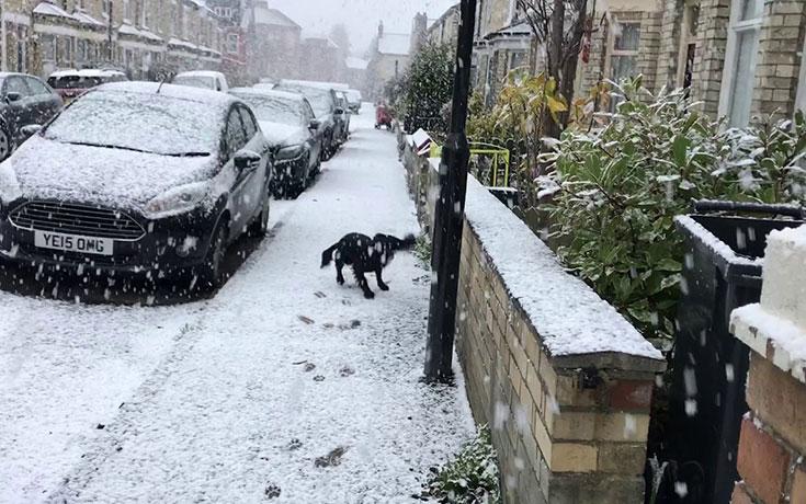 χιόνι Σκύλος