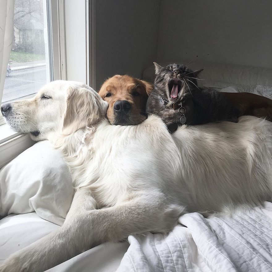 σκύλος και γάτα σκύλοι Γάτα