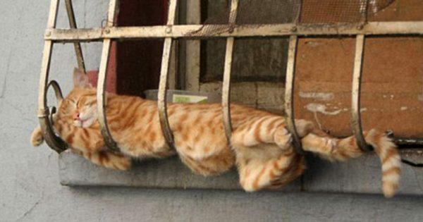30 φωτογραφίες που αποδεικνύουν ότι οι γάτες απλά μπορούν να κοιμηθούν παντού