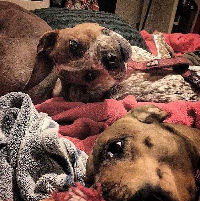τι συμβαίνει με αυτόν τον σκύλο Σκύλος