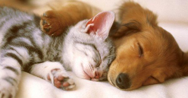 Οι σκύλοι είναι πιο έξυπνοι από τις γάτες, σύμφωνα με νέα έρευνα