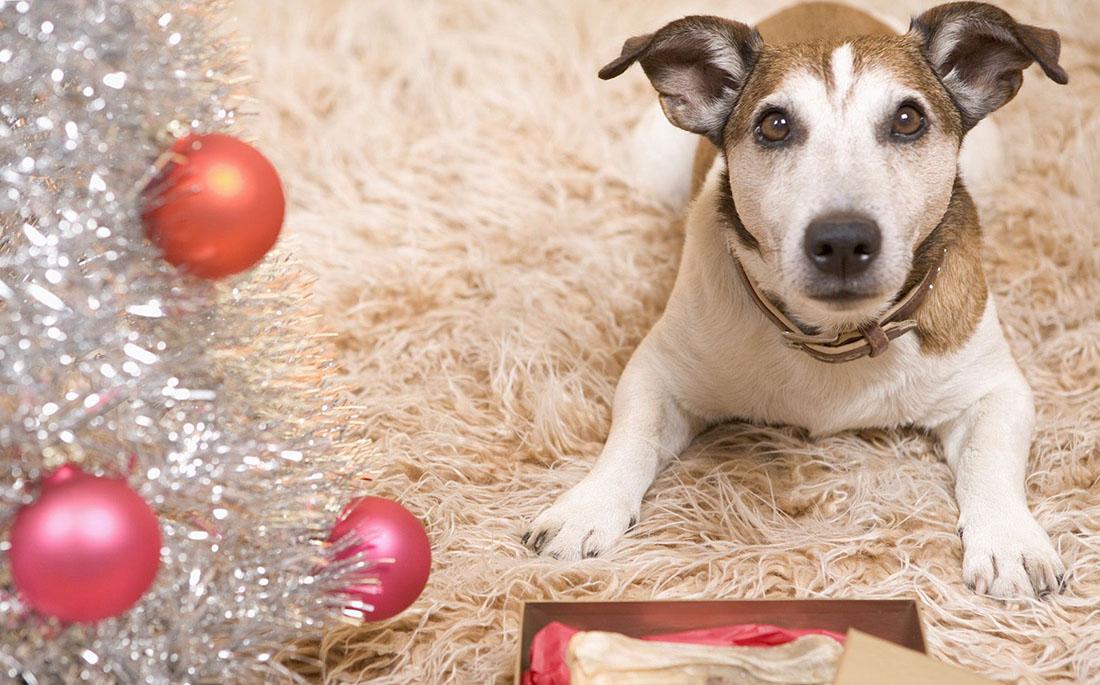 Σκύλος γιορτές