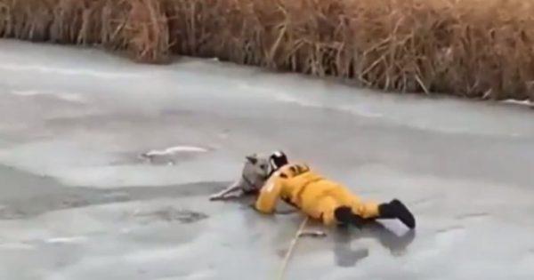 Η δραματική διάσωση ενός σκύλου που έπεσε σε παγωμένη λίμνη (video)