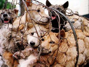 Δηλητηρίαζαν σκύλους με σύριγγες για το κρέας τους