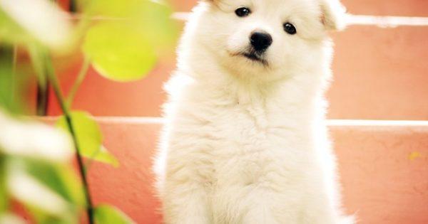 Βίντεο: Ο σκύλος και το νέο του απόκτημα δεν τα πάνε πολύ καλά!