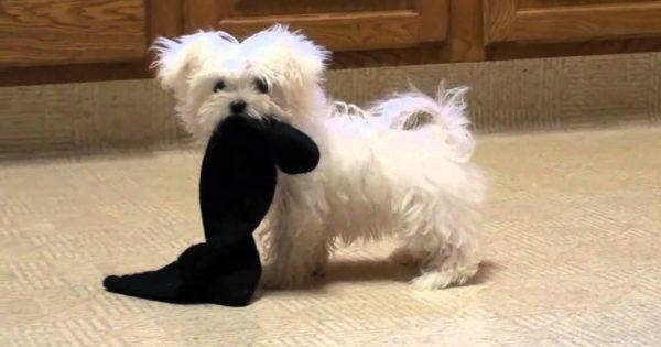 Ο σκύλος μου έφαγε μια κάλτσα! Τι κάνω;
