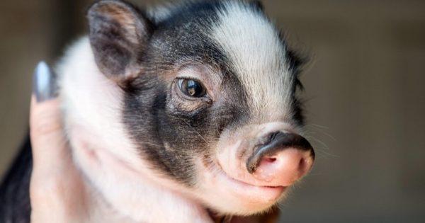 Τα δέκα πιο έξυπνα ζώα στον πλανήτη!