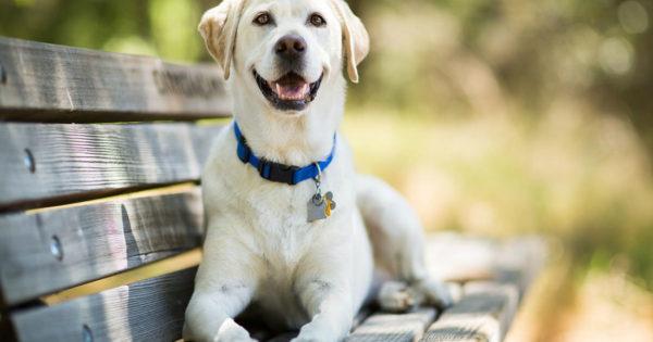 4 τρόποι με τους οποίους ένας σκύλος σου δείχνει την αγάπη του