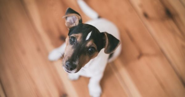 Σκύλοι και αριθμοί: 16 απίθανα πράγματα που ίσως δεν γνωρίζεις
