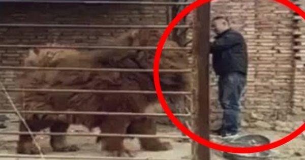 Βίντεο: Αυτά είναι τα 5 μεγαλύτερα σκυλιά-φύλακες του κόσμου!