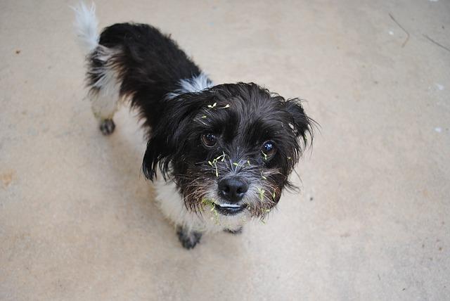 σκύλος μυρωδιά Σκύλος μυρωδιά σκύλου