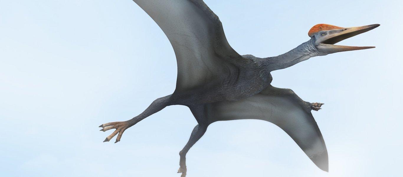 o-pterodactylus-facebook