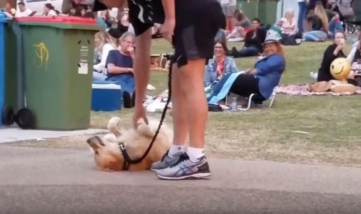 Σκύλος πάρκο βόλτα στο πάρκο