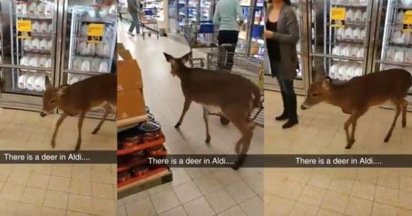 Ελάφι μπήκε στο σούπερ μάρκετ να κάνει τα…ψώνια του!