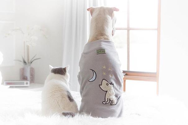 Σαρ Πέι Γάτα