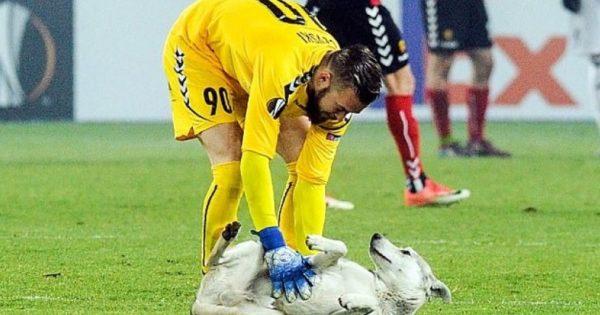Σκύλος διέκοψε το Βάρνταρ – Ρόσενμποργκ γιατί… ήθελε χάδια! (vid)
