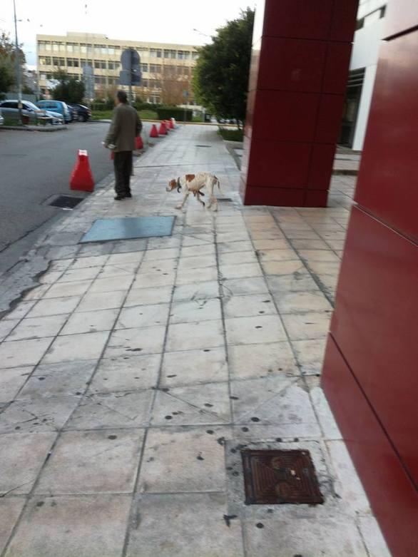 σκυλί σκελετωμένος σκύλος σκελετωμένο σκυλί