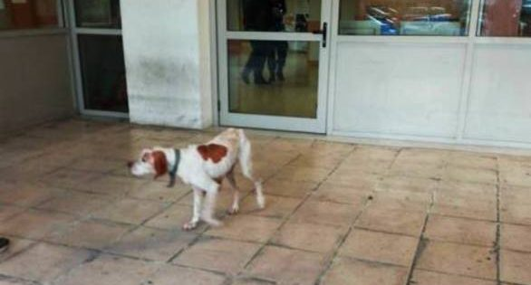 Σκελετωμένο σκυλί τριγυρνάει στον «Άγιο Ανδρέα», στην Πάτρα – Σκληρές εικόνες