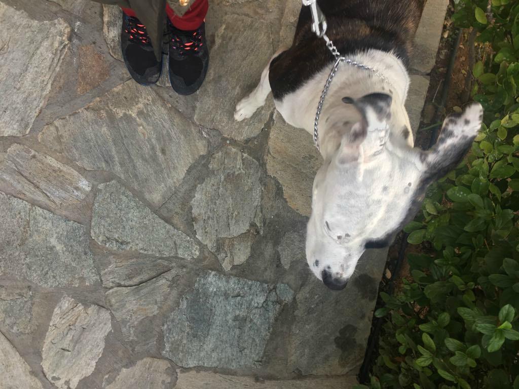Σκύλος βόλτα με σκύλο